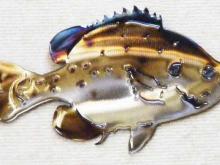 bluegill,bream,perch,freshwater,fishing,lake,pond,river,angler