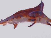 Marlin,Blue Deep Sea Fishing