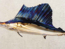 sailfish,deep,sea,fishing,gulf,blue,fin,marine,art